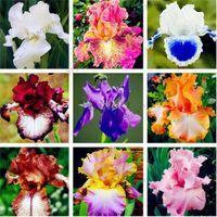 100 قطع بذور القزحية ، بذور القزحية السحلية ، الإرث نادر tectorum بذور زهرة المعمرة ، 24 الألوان للاختيار ، نبات للمنزل حديقة