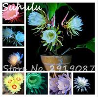 50 Unids Raras Hermosas Semillas de Flores Epiphyllum Orquídeas Raras Cactus Plantas de Flor de Noche Flor de Jardín En Casa