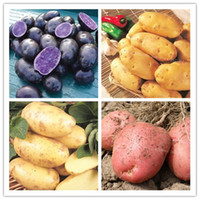 100 Pcs High Quality Delicious Potato Seed Rare Organic High-Nutrition Potatoes Fruit And Vegetable Home Jardin Planters For Happy Farm