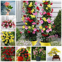 120 Pz Rare Colore Gardenia Semi (Cape Jasmine) -DIY Casa Giardino In Vaso Bonsai, incredibile odore bellissimi fiori Spedizione Gratuita