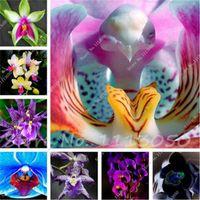 100 Шт Цимбидиум Семена, Радуга Китайский Цимбидиум Орхидеи Семена Цветов, Горшечные Растения, Крытый Бонсай Семена Цветов Цикада Орхидеи Семена