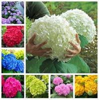 50 шт / мешок семян гортензии, бонсай семена цветов фарфора гортензии многолетние садовые цветы семена растений открытый горшок
