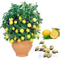 Limon ağacı Tohumları Bonsai meyve ağacı tohumları. Organik sarı Limon tohum kapalı Bonsai bitki Ev Gatden için 30 adet / torba Ücretsiz Kargo