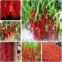120 PC의 / 가방 빨간 긴 칠리 씨앗, 야채 고추 씨앗, 관상용 과일 야채 씨앗 Diy 정원 식물