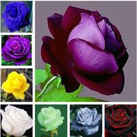 120 шт редкий цвет китайская роза дерево бонсай семена многолетние цветы для сада горшечные плантаторы Semillas де Флорес Рарас