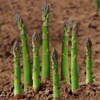 100個アスパラガスの種子下血圧、野菜、果物の種、盆栽植物の種のための植物のための植物の植物送料無料