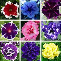 100 PC 피튜니아 씨앗, 꽃 피튜니아, 아름다운 분재 꽃 씨앗, 자연적인 성장 피튜니아 식물 냄비 가정 정원 화분에 심은 식물