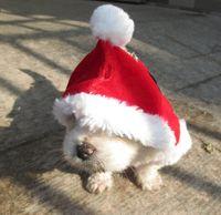 XXS perro más pequeño de Navidad ropa ropa ropa de lana encapuchadas mascota traje del perro linda capa de la ropa Pet Party Cosplay para 0.8-1.5KG perro