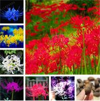Mezcla de colores raros Lycoris Radiata Bulbs, (no semillas), plantas en maceta Plantar estaciones Bonsai de interior Planta para jardín de casa-2 bulbos