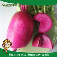 Suntoday китайский красный вишневый редька Raphanus посевной дайкон семена овощей Азиатский сад завод фамильные номера-ГМО гибридный органические свежие семена