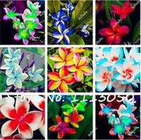100 Pçs / saco Plumeria (Frangipani, Lei Havaiana Flor) Sementes, Raras Exóticas Sementes de Flores Ovo Sementes de Flores para Casa Jardim
