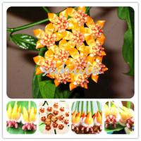 Raro Japonês Macaco Rosto Orquídea Sementes Diy Plantas de Jardim Para Casa Pote Bonsai Flores Sementes Para Diy Casa Jardim Plantas 100 Pcs