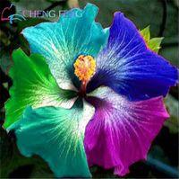 100 unids / bolsa gigante hibiscus semillas de flores semillas de hibiscus raras semillas de flores bonsai semillas de plantas al aire libre para jardín de casa fácil de cultivar