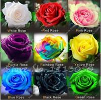 50 PC의 / 가방 희귀 혼합 색 장미 씨앗 무지개 장미 씨앗 분재 꽃 종자 블랙은 가정 정원에 대한 희귀 한 발코니 식물 장미
