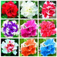 혼합 피튜니아 씨앗, 이중 꽃잎 피튜니아 씨앗, 꽃 분재 식물 실내 피튜니아 꽃잎 꽃의 아름다움 정원 - 100 PC / 로트