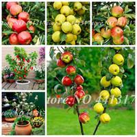 100 PC / 가방 씨앗 드워프 애플 분재, 미니어처 사과 나무 실내 야외 달콤한 유기농 과일 야채 냄비 식물 DIY 홈 정원