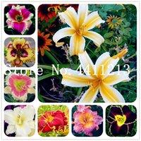 100 шт Hybrid Mix Желтый лилейник Цветы Бонсай Семена растений Rare Цвет Гибридные Hemerocallis растения New Day Lily растения Packet Garden Decor