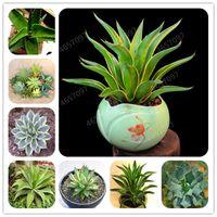 300 PC mezclaron las semillas de Aloe Cactus Agave Bonsai Plantas suculentas raras Agave Agave-Americana en maceta Plantas para jardín Decoración