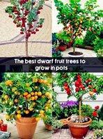 4 вида фруктов, бонсай фруктовые деревья растения, овощи и фрукты бонсай сад завод вкусный апельсин персик слива вишня семена 200 шт. для продажи