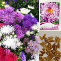 1 упаковка оригинальная упаковка красочные Астры семена цветов бонсай растение