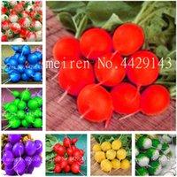 200 Pçs Sementes Rare Organic Radish Bonsai Juicy e Nutritious Spring Spring Radish Muito delicioso Vegetal Jardim Comida Fácil de Crescer