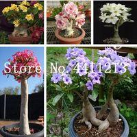 5 pcs / lot 100% vrai désert rose bonsaï plantes plantes plantes ornementales balcon fleurs en pot bonsaï adénium obésum bonsaï pour jardin à la maison