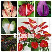 200 Stück Samen Indoor Bonsai Anthurium Pflanzen Indoor Topf hydroponischen Blumen Pflanze Anthurium Andraeanum Mix Farben Gartenpflanzen