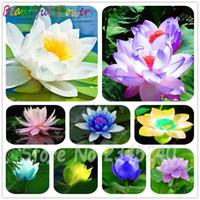 Vente 10 pcs / sac graines Mini Bowl Lotus Bonsai hydroponique plantes aquatiques fleurs Pot intérieur Nénuphar Plante en pot décor de jardin