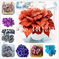 Vendita calda! 100 Pz Rare Exotic colori Begonia, Begonia Bonsai fiori Indoor Piante in vaso per la casa Giardino Balcone Coleus Bonsai facile da coltivare