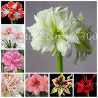 400 шт. Семена Multi цвет Amaryllis цветок бонсай Hippeastrum Barbados лилия цветочные горшки для домашних рощеных украшений стеблевые растения легко расти