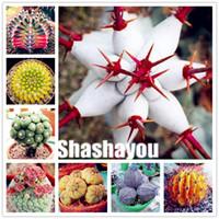 1000 штук на сумку Реальные мини Euphorbia obesa Флорес, смешанный кактус суккуленты растения бонсай семян многолетнего завода, бонсайский завод для домашнего сада