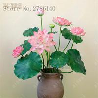 9e5fbf57e307 New Arrival. flower flower lotus flower for summer 100% real Bowl lotus  pots Bonsai garden plants 5 bag