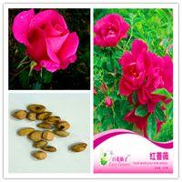 1 paquete Paquete original Rosa roja semillas de flores de hierba en maceta de plantas bonsái Rosa roja Rosa venta resistente perenne Bonsai Plant caliente