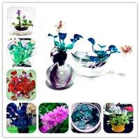 Quente 100 Partículas / Saco Bonsoi Hyacinth Water Hyacinth Sementes de Flores Plantas Aquáticas Água Hyacinth Flutuante Pond Pond Aquário Lotus Fissidens Fontanus