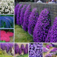 200 pcs / sac chagriner thym de bonsaï plantes plantes, couleur rare rock crevet couve pérennial couverture de terre fleur croissance naturelle pour la maison et le jardin