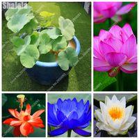 20 pcs / sac de graines fleurissant fleur de lotus couleur mixte BONSAI HYDROPONIC plantes plantes aquatiques en pot pour planteurs de pot de fleurs