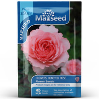 Blumen honigsüß Rose Blumensamen 100PCS / PACK Rosa Rose SEED HAUSGARTEN Perennial Ältere Bonsai Pflanze Großhandel