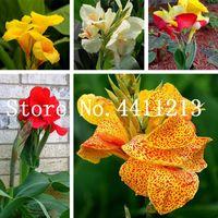 100PCS / 가방 멀티 컬러 다년생 칸나 꽃 식물 나무 분재 식물 씨앗 관상용 식물 바나나 속 Semillas를 들어 홈 정원 심기