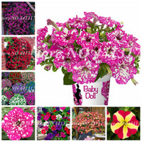 200 pcs Seeds Great Mixed Bonsai Petunia Flower Plant Exotic Blooming Outdoor Morning Glory Flore Pot Plants for Home Garden Supply