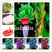 200 Pçs Banana Frutas Bonsai Sementes Orgânicas Heloom Dwarf Fruit Fruit Plant Outdoor Perennial Frutas Saudável Nutritious Food Home Garden