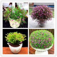 Semillas de venta caliente! Planta de Navidad flores regalo en maceta, 100 PCS Gypsophila Flower Bonsai Plantas para jardín Balcón Decoración