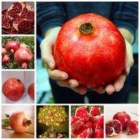 20 pezzi semi giardino mini bonsai melograno pianta molto dolce deliziosa frutta pianta pianta perenne succulenti albero in vaso piante piante piante facile