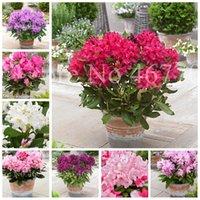 ¡Gran venta! 200 PC Semillas japonés Azalea Bonsai Rododendro Azalea cubierta árbol de la flor en maceta cubierta de la flor DIY de Plantas de jardín Decoración