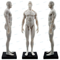 1: 6 Flesh Anatomy superficial muscle Human Body Muscule skel...