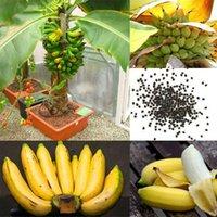 1Set / 100 stücke Seltene Zwerg Bananenbaum Bulksamen Mini Bonsai Tropische Früchte Topfpflanzen