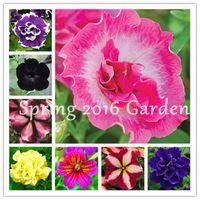 300 Pcs/bag Bonsai Petunia Flower seeds Morning Glory Plant Very Easy Grow Rare Petunia Flowers Bonsai Plant for Home Garden Decoration