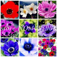 200 Pcs / Sac Graines Arc-En-Bonsaï Argent Fleur De Lotus Plante Bonsaï Plantes D'Intérieur Fleurs Bonsaï Maison Jardin Décor DIY Cadeau Pour Femme