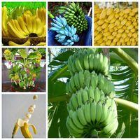 200 Pçs Anão Sementes de Banana Bonsai Árvore Tropical Fruta Ao Ar Livre Vasos Varanda Flor de Jardim para Planta Home, Taxa de Germinação de 95%