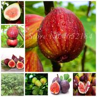 Venta Semillas 200 PCS raras tropicales Figura HIGA MINI HIGA ÁRBOL BONSAI planta al aire libre Juicy Fruit for Home Garden Flower Pot Planti