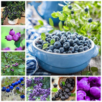새로운 200 PC 씨앗 블루 베리 분재 과일 야외 나무 Highbush 블루 베리 DIY 카운티 카라 드 냄비에 대 한 Countyard 식물 성장 쉽게